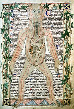 800px-13th_century_anatomical_illustration_-_sharp